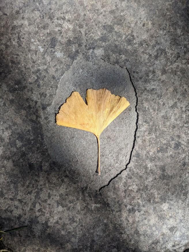 fossil2_resize.jpg